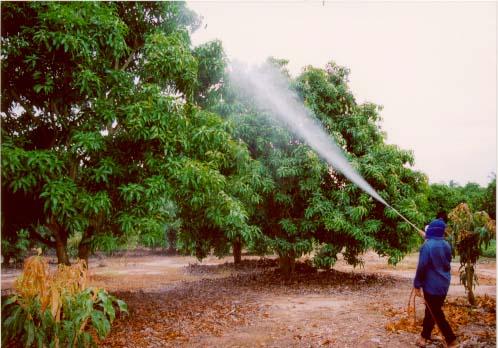 How to mix fertilizers for foliar feeding - Haifa Group
