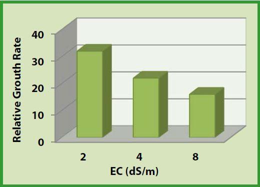 Crop Guide: Growing Cucumbers - Haifa Group