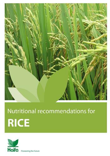 دانلود کتاب راهنمای برنج