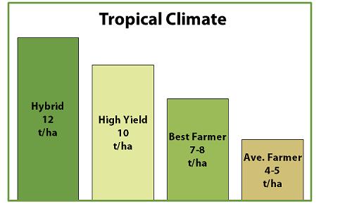 Crop Guide: Rice Cultivation - Haifa Group