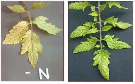 kertgondozás növények tápanyaghiánya nitrogén kálium foszfor