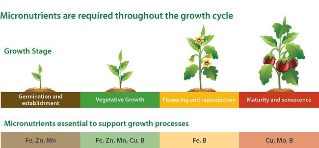 micronutrients in herbs