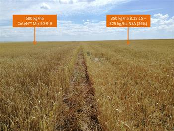 Resultados de la aplicación comercial de CoteN™ Mix en el cultivo de trigo en Salamanca (España).