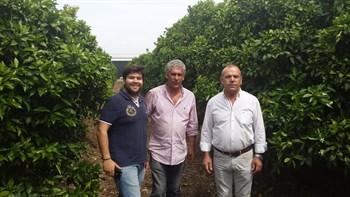 Éxito con el uso del fertilizante CoteN™ Mix, como abonado de fondo en el cultivo de los cítricos, en la zona de Cantillana (Sevilla, España).