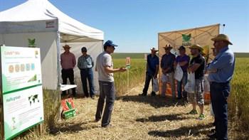 Jornadas de campo para divulgar el buen comportamiento del CoteN™ Mix en el cultivo del cereal.