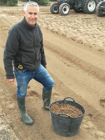Óptimos resultados en la fertilización de la Chufa (Cyperus esculentus)
