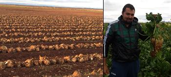 Éxito del fertilizante de liberación controlada CoteN™ Mix en el cultivo de la remolacha de la zona norte.