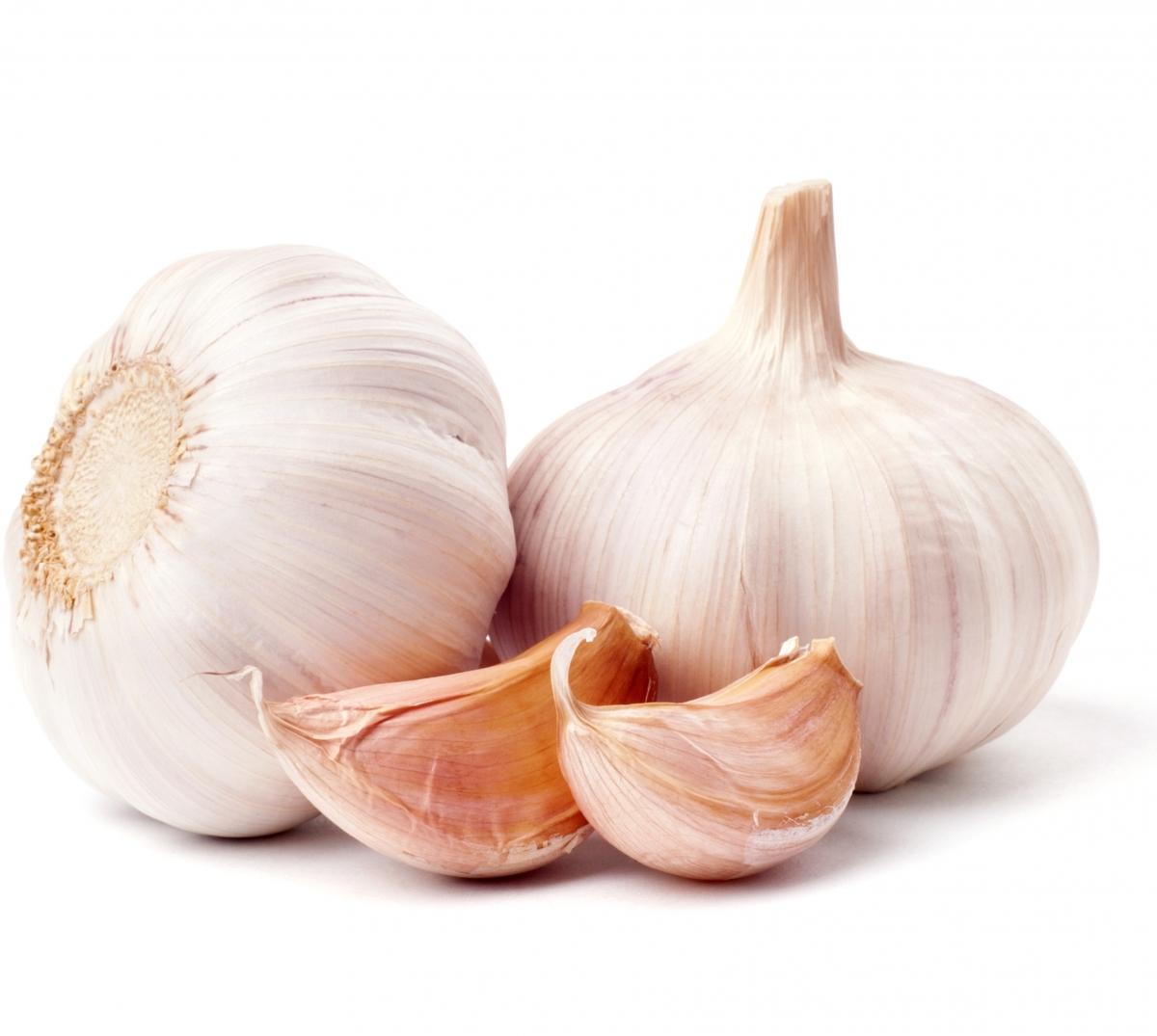 How to grow garlic with Haifa Fertilizers - Haifa Group