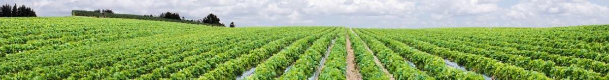 Strawberry Crop Guide Haifa Group
